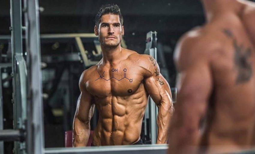 Carnitine: The perfect supplement